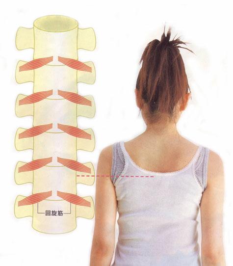 骨盤矯正体操・回旋筋を鍛えるひねり骨盤体操