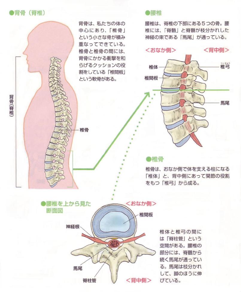 原因 腰痛