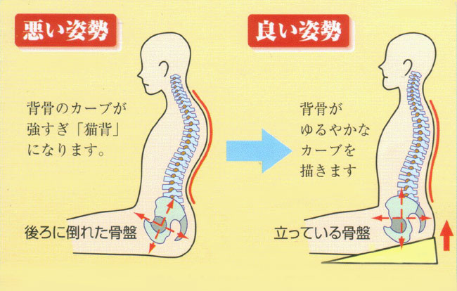 背骨が伸びた正しい姿勢