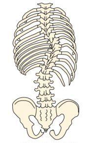 胸椎右側湾症(後面)